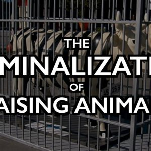 "Criminalization of Raising Animals: Dutch Sell ""Pig Rights"""