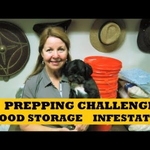 Prepping Challenges Adding To Prepper Pantry Food Stockpile - Rat Infestations