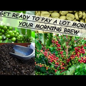 COFFEE PRICES ARE GOING UP AROUND THE WORLD; GET READY TO PAY UP TO 40% MORE FOR YOUR MORNING JAVA